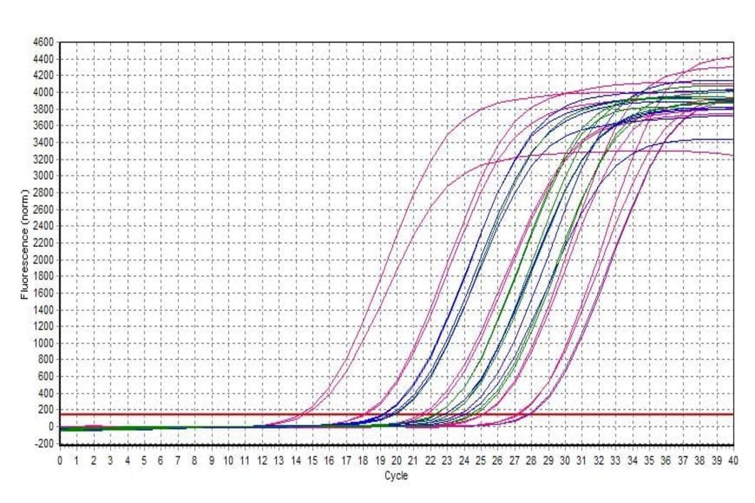QPCR, bifinove, analyses, PCR, ADN, courbes