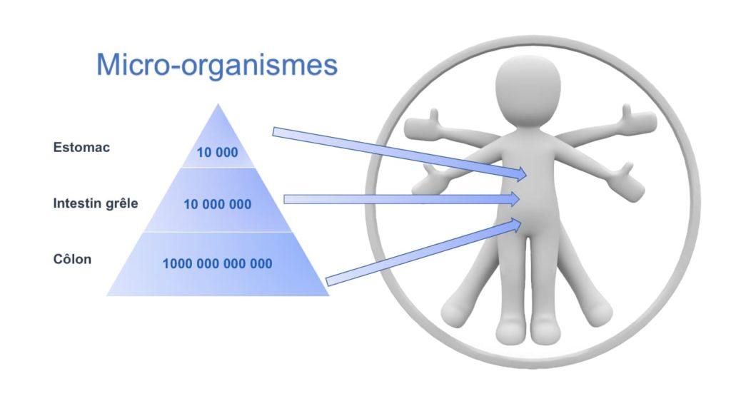 schéma répartition micro-organismes