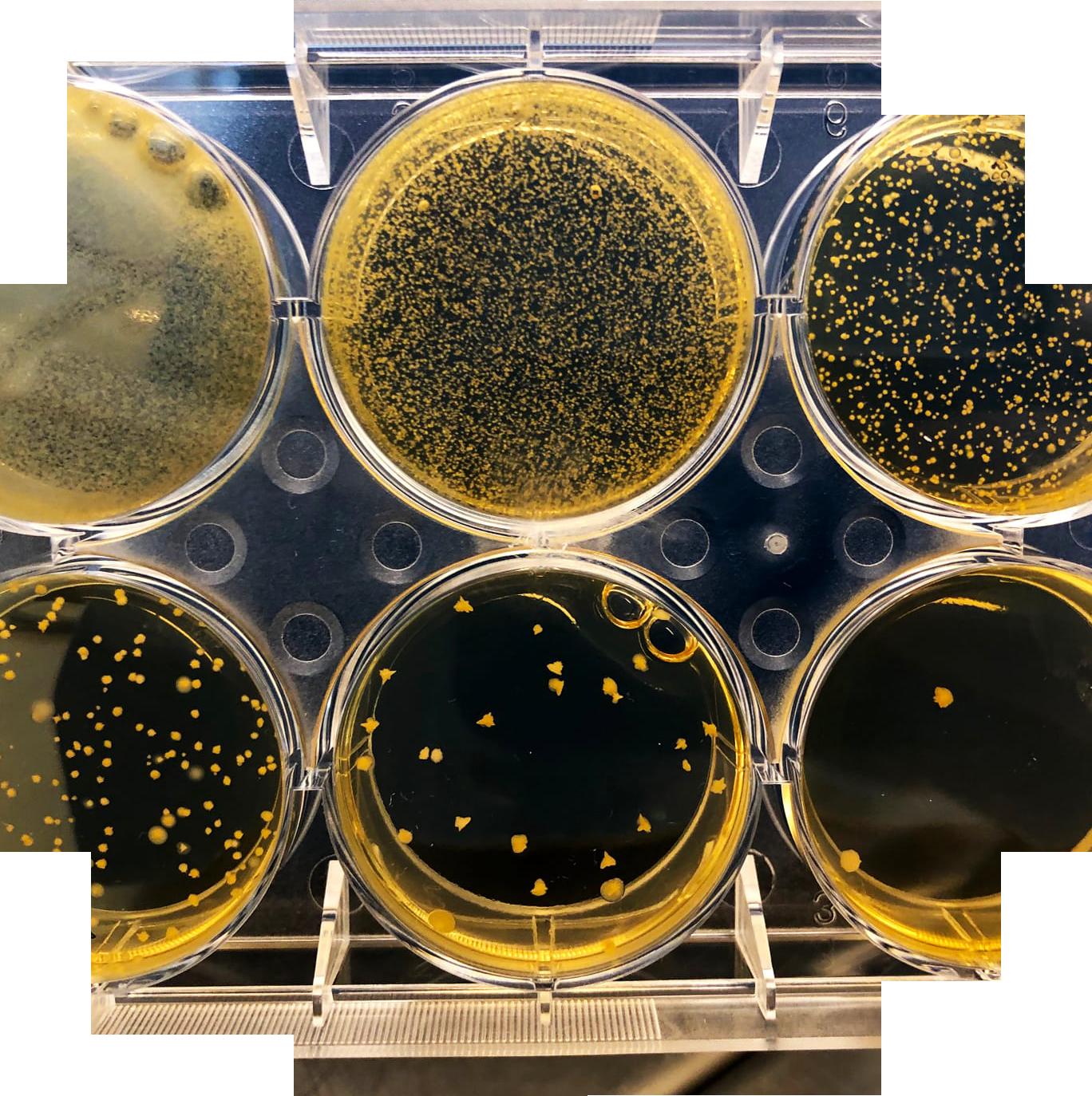 culture cellulaire 4