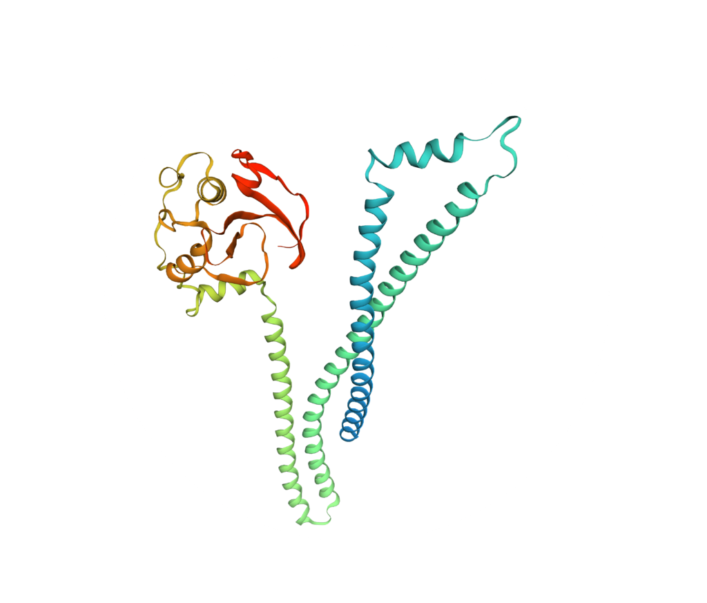 structure lipoprotéine